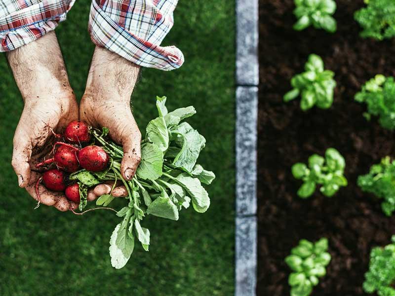 los mejores seguros agrarios